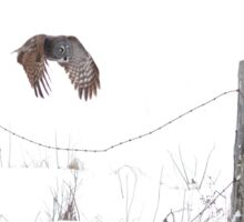 Post to Post - Great grey owl Sticker