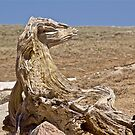 Is it a Stump or a Serpent by John Butler