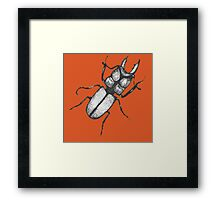 Beetle bums Framed Print