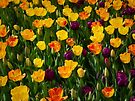 Spring Tulips by Kathy Weaver