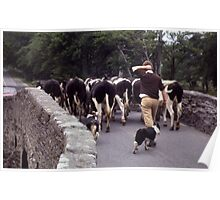 Driving the Cows Poster