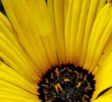 Yellow Gazania Flower from A Gardener's Notebook Sticker