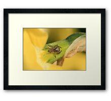 Spider and Flower Framed Print