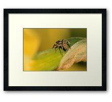 Spider Eye Framed Print