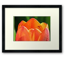 Spider and Tulip Framed Print