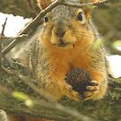 Squirrel and His Nut  by lorilee