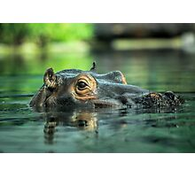 Hippo bathtime Photographic Print