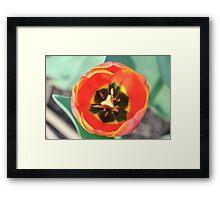 Inside a Tulip Framed Print