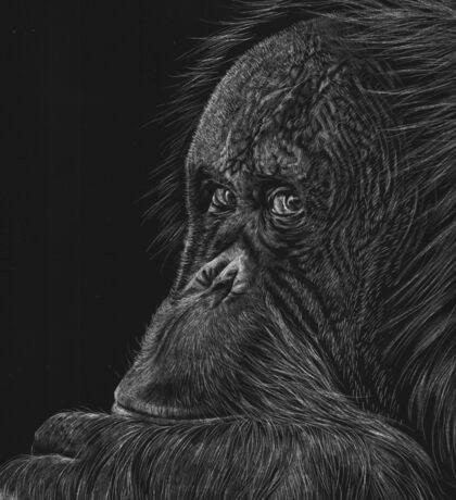 Melati the Orangutan Sticker