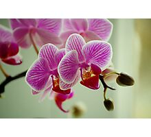 Pretty Pink Orchid Photographic Print