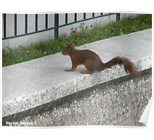 The Squirrel Poster