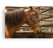 The Equine Touch Canvas Print