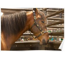 The Equine Touch Poster