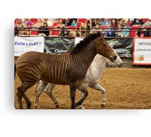 The Equine Touch 3 Canvas Print