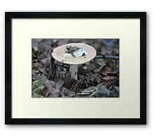 Flat Topped Mushroom  Framed Print