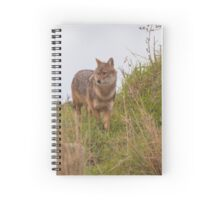 Golden Jackal (Canis aureus), also called the Asiatic, Oriental or Common Jackal, Israel Spiral Notebook