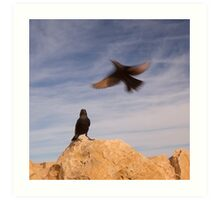 Israel, Dead Sea, Tristram's Starling or Tristram's Grackle Art Print
