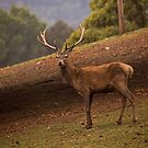 The Stag by Bevlea Ross