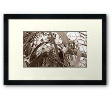 Sepia Eucalyptus Framed Print