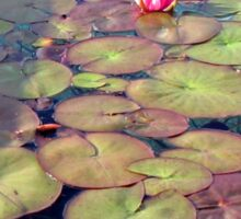 Pink Water Lilies at Sunset  Sticker