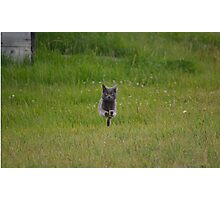 Bounding Grey Farm Cat Returns Home Photographic Print