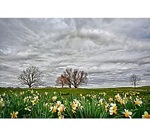 Almost Spring! Photographic Print