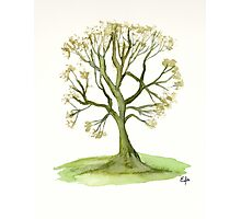 Green tree - Watercolor painting Photographic Print