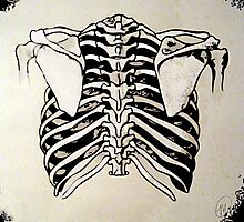 Back of Ribcage Photographic Print