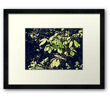 Green Mood 2 Framed Print