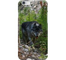 Stalking Grey Wolf and Forest iPhone Case/Skin