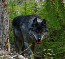 Stalking Grey Wolf and Forest Sticker