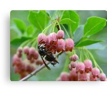 Wasp and Red Bells Canvas Print