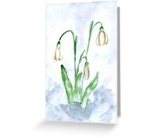 Snowdrop Flowers Painting 3 Greeting Card