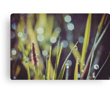 Morning Grass Macro Retro 2 Canvas Print