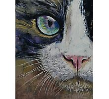 Snowshoe Cat Photographic Print
