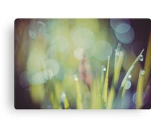 Morning Grass Macro Retro 3 Canvas Print