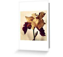 Two-Tone Iris Greeting Card