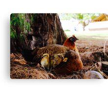 Hawaiian Chicken Family, Pipeline, North Shore, Oahu, Hawaii Canvas Print