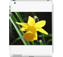 Backlit Daffodil iPad Case/Skin