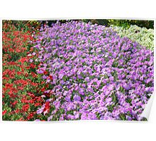 Rows of colorful flowers in the park. Poster