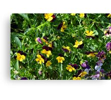 Yellow flowers in the green grass. Canvas Print