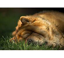 It's time to sleep Photographic Print