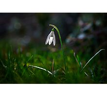 Snowdrop Photographic Print