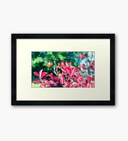 Autumn Berry Framed Print