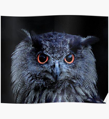Orange Eyed Owl Portrait Poster