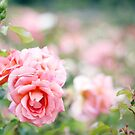 rosy, rosie... by Vickie Simons