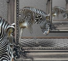 Zebra black or white stripes? Sticker