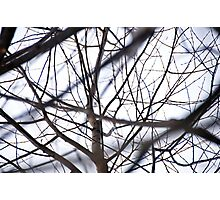 the tracery of offshoots of a tree Photographic Print
