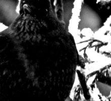 Ms Black Bird Sticker