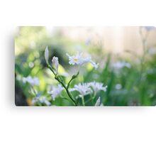 White Iris 3 Canvas Print